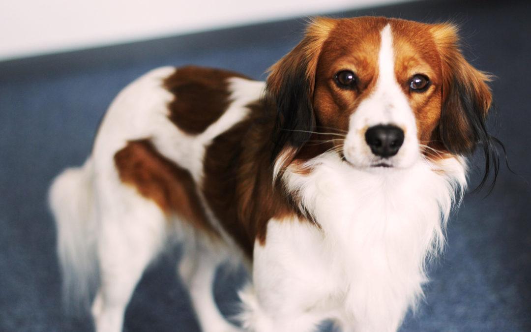 Wer ist askDANTE und was hat der Hund damit zu tun?