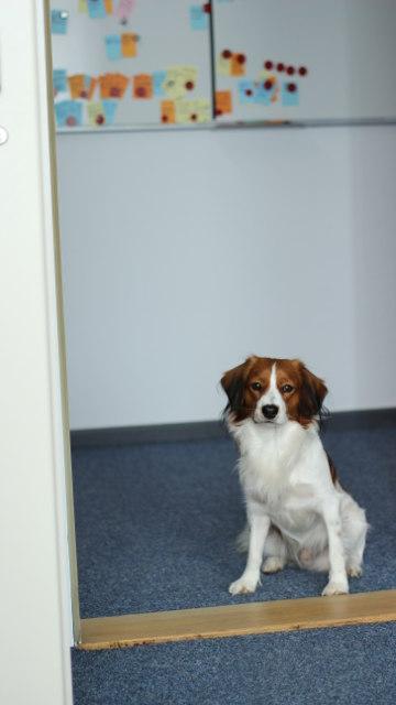 Bürohund Dante