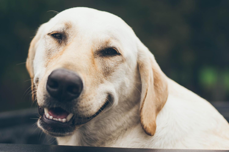 Pelziger Kollege – Hunde im Büro